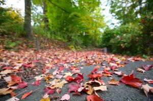 Opinions_Autumn