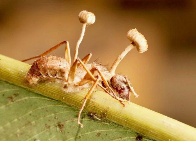 zombie-ant-fungus-770x554